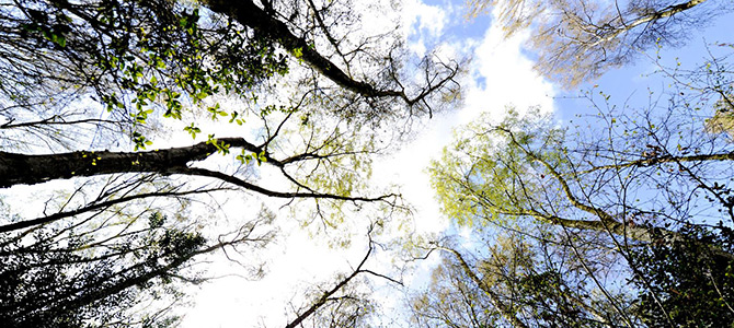 View up at the trees